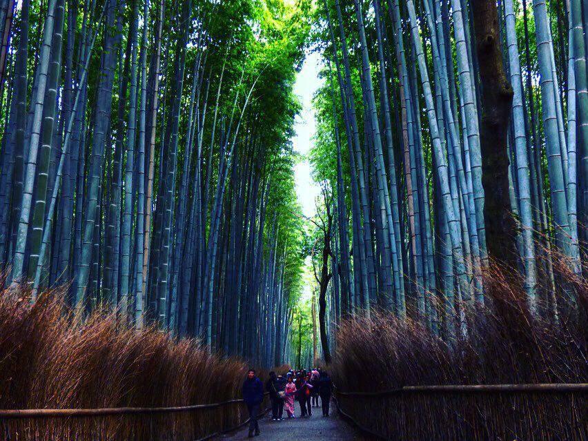 bamboo groves Kyoto itinerary